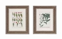 flowers (12 works) by johann wilhelm weinmann