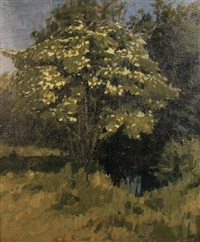 elder tree by lawrence self