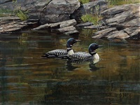 a pair of loons by robert mclellan bateman