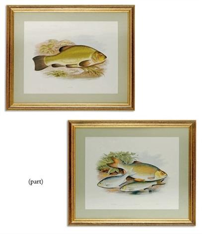 british freshwater fishes 10 works by william hougton