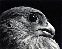 kopf eines vogels by walter boje