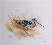 wilson's snipe by james fenwick lansdowne
