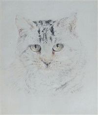 study of a cat by william huggins