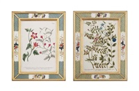 botanical studies from: phytanthoza iconographia (12 works) by johann wilhelm weinmann
