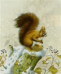 red squirrel by matthew hillier