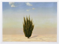 cedar tree, israel by john beerman