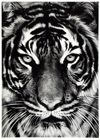 white tiger by robert longo