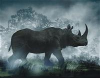 rhinocéros by didier massard