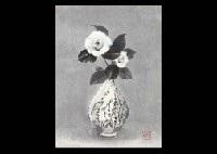 white camellias by akira akizuki