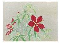 rose mallow by okazaki tadao