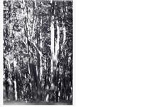wald (tierra del fuego) ii by wolfgang tillmans