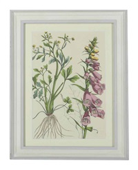 floral studies (12 works) by charlotte mary yonge