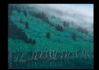 mountain gap in the fog by yukio toyama