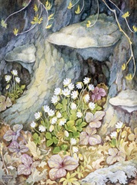 hepatica in forest by john barrie rennie