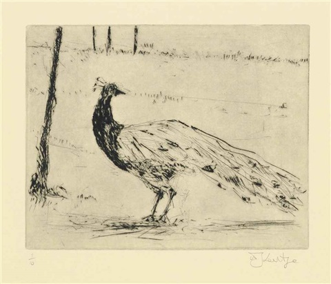 untitled peacock by william kentridge