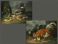 wildentenpaar mit küken in landschaft sowie hühnerpaar ebenfalls (+ küken vor einem gemäuer mit blattwerk; pair) by jacob samuel beck