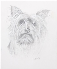 yorkshire terrier by rex flood