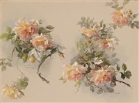 apricotfarbene rosen by constanze münch