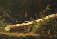 bécasses dans un sous bois by cordier conty