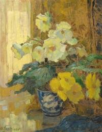 weifee und gelbe begonium by anna gasteiger