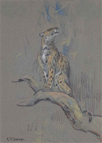 a leopard on a branch by cuthbert edmund swan