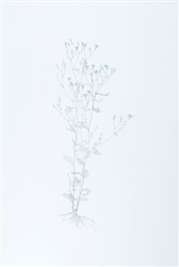 nipplewort (from nourishment) by michael landy