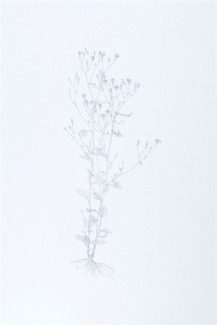 nipplewort from nourishment by michael landy