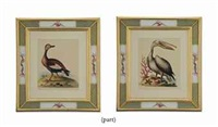 engravings (from a natural history of uncommon birds; 12 works) by george edwards