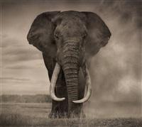 portrait of elephant in dust, amboseli (from