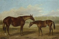 cavallo e puledro by thomas j. scott