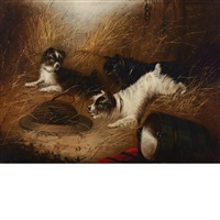 terriers and the trap by edward armfield