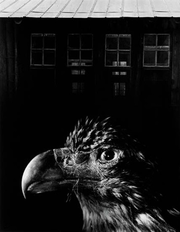 bless our home eagle by jerry uelsmann