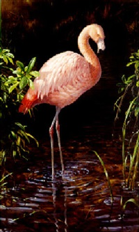 chilean flamingo by michael jackson