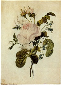 study of roses by wilhelmine anselmann