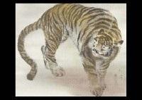 tiger by tomoki moriyama
