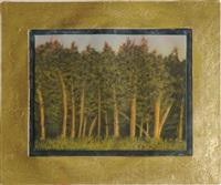 pine trees by john beerman