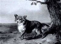 maltese terrier in the roman campagna by valatti
