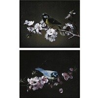 blue tit on a branch of plum tree in bloom (+ great tit on a branch of cherry tree; pair) by pierre etienne remillieux