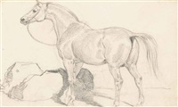 study of a horse by sir edwin henry landseer