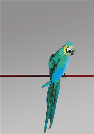 pappagallo by michelangelo pistoletto