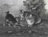 cats by giovanni sanvitale