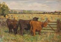 highland cattle at harvest time by j. denovan adam jr.