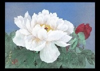 red and white peony by oya toshihiko