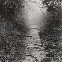 a way throught the wood by joan fontcuberta