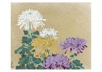 chrysanthemum by sai morita