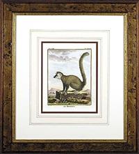 lemurs (6 works) by georges louis leclerc buffon