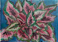 bladbegonia - begonia by jan boon