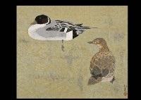 duck by ken yoshioka
