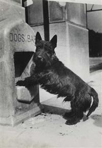 dogs bar by ylla