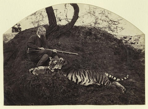 portraits of tiger trophies pair by wallace willoughby hooper